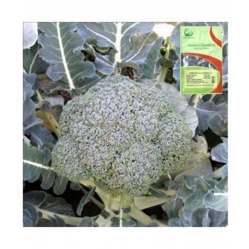 Seminte de broccoli, Stromboli F1,1000 seminte, Hazera