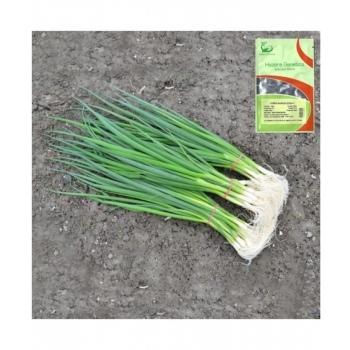 Seminte de ceapa verde Savel, 50000 seminte, Hazera