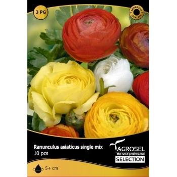 Bulbi Ranunculus mix 10