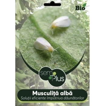 Insecticid bio impotriva musculitei albe 50 grame, SemPlus