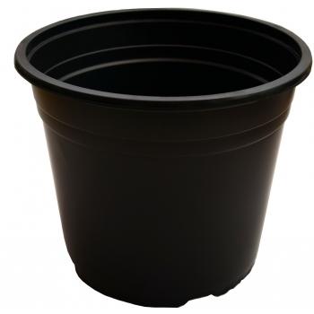 Ghiveci VCD negru(12 cm), Blondy