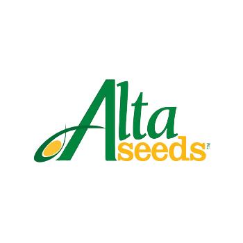 Seminte porumb Trinidad(50.000 sem/sac), Alta Seeds