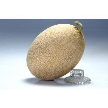 Seminte pepene galben Amal F1(1000 sem) Clause