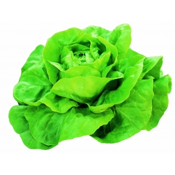 Seminte salata Justine(10 gr) Clause #2