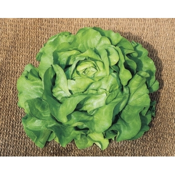 Seminte salata Sandrine(10 gr) Clause