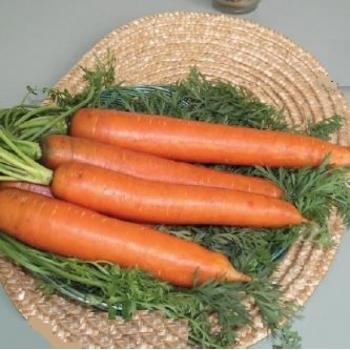 Seminte morcovi Marion F1(100.000 seminte), Agrosel