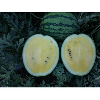 Seminte pepene verde Peace F1(0.5 gr), Agrosel, 3PG #4