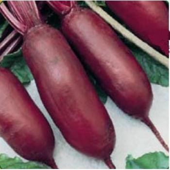 Seminte sfecla rosie Cylindra(100 gr), Agrosel