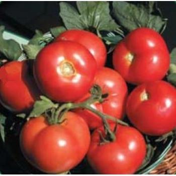 Seminte tomate Ronda F1(100 sem), Agrosel