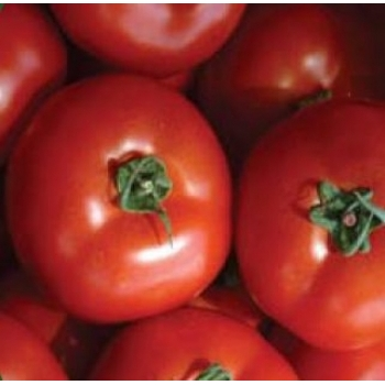 Seminte tomate Megisti F1(100 sem), Agrosel