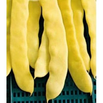 Seminte fasole urcatoare Juliska (250 gr), Agrosel