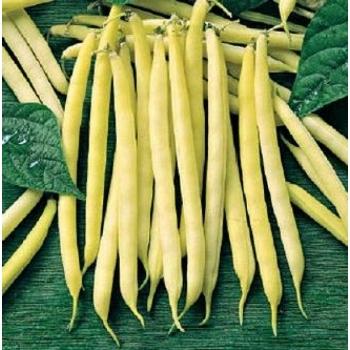 Seminte fasole oloaga Maxidor (500 gr), Agrosel