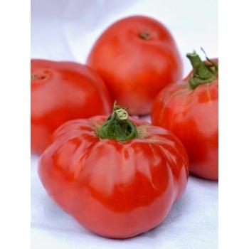 Seminte tomate Elisabeta(3000 sem), Agrosel