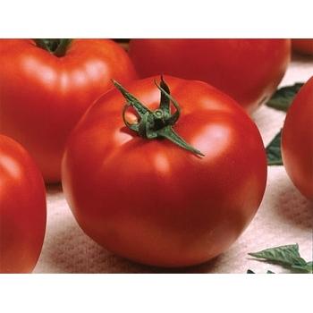 Seminte tomate Optima F1(500 seminte), Seminis