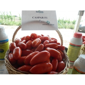 Seminte tomate Caspar F1(500 seminte), Seminis