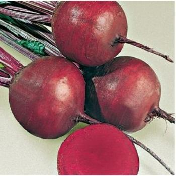 Seminte sfecla rosie Detroit 2(250 gr), Agrosel