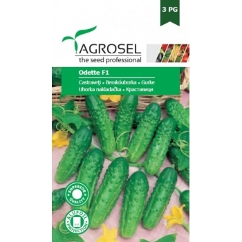 Seminte castraveti cornichon Odette F1(20 sem), Agrosel