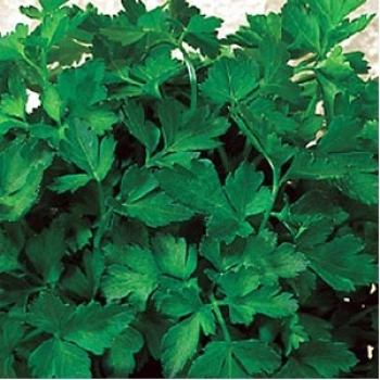 Seminte patrunjel frunza(25 gr), Seminis