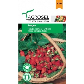 Seminte fragute Ruegen(0.10 gr) Agrosel, 2PG