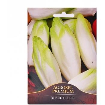Seminte Andive di Bruxelles premium Agrosel