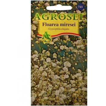 Seminte flori Floarea miresei (1gr) Agrosel