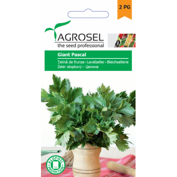Seminte Telina de frunza Giant Pascal(2 gr), Agrosel, 2PG