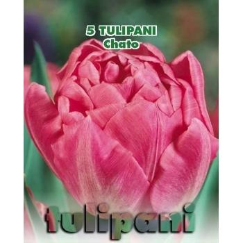 Lalele duble Chato, floare roz, inaltime planta 35 cm,  Green Paradise