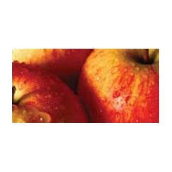 Ingrasamant lichid pentru fructe si legume,  cu aplicare foliara si fertirigare, Fort CalMag, cu aport suplimentar de calciu si magneziu, 1L, Adfert #2