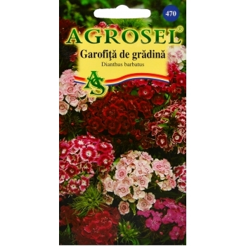 Seminte flori Garofita de gradina inalt melanj(1 gr) Agrosel, 2PG