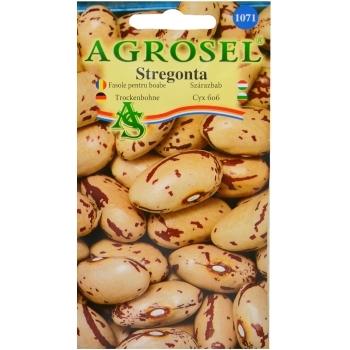 Seminte fasole pentru boabe Stregonta Nano (25 gr) Agrosel