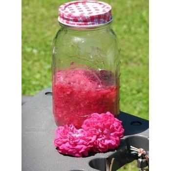 Trandafir pentru dulceata, cu floare batuta de culoare roz, Rose de Rescht,  Famous Roses #3