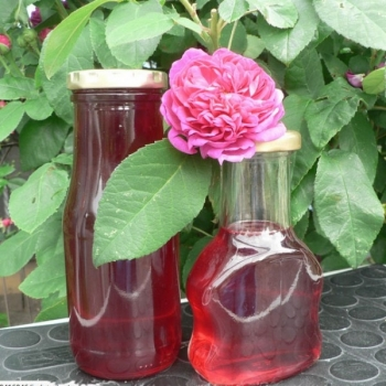 Trandafir pentru dulceata, cu floare batuta de culoare roz, Rose de Rescht,  Famous Roses #4