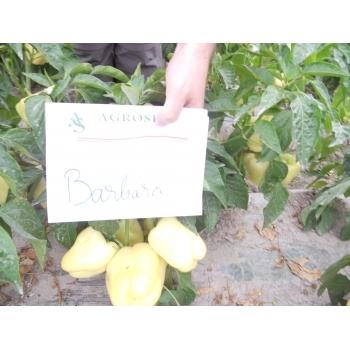 Seminte ardei gras Barbara(1 gr) Agrosel #5