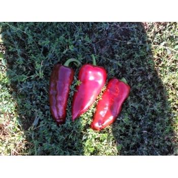 Seminte ardei lung Alexandru(1 gr) Agrosel #15