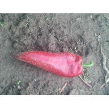 Seminte ardei lung Alexandru(1 gr) Agrosel