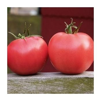 Seminte tomate  Aphen F1 (1000 sem), Clause