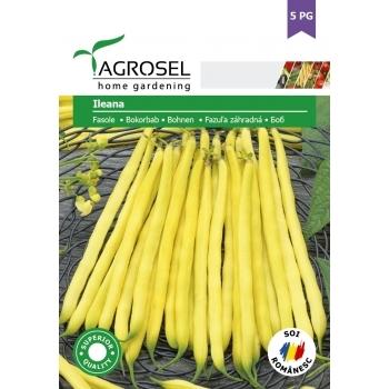 Seminte Fasole Ileana (45 gr)5PG, Agrosel
