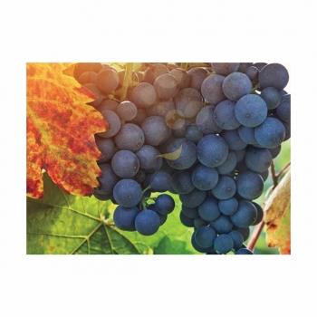 Ingrasamant Nutrivit 50 pulbere fina cu aplicare foliara, 10kg, EuroTSA