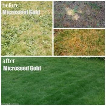 Ingrasamant microseed gold, microgranulat cu aplicare la sol, 10kg, eurotsa #4