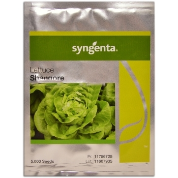 Seminte salata Shangore(5000 sem) Syngenta