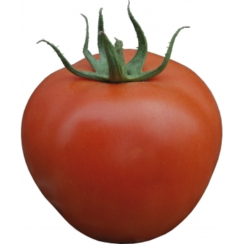 Seminte tomate ZKI 04240 F1, 250 seminte #2