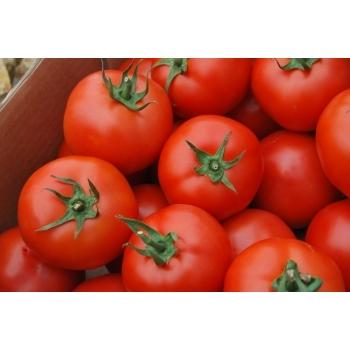 Seminte tomate ZKI 04240 F1, 250 seminte