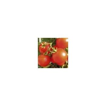 Seminte tomate Korall, 1000 seminte