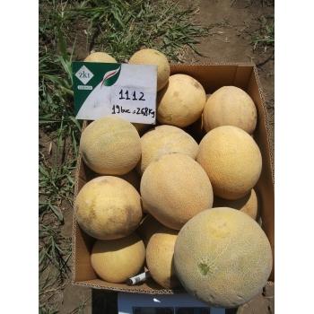 Seminte pepene galben Milica F1 (ZKI 1112 F1) , 100 sem #3