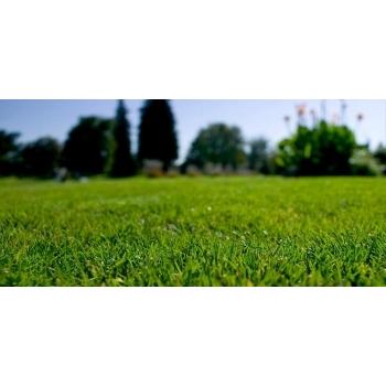 Seminte gazon pentru parcuri si gradini Ornamental Turfline 1 Kg #2
