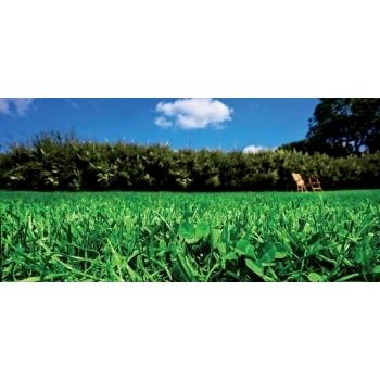 Seminte gazon ecologic cu trifoi alb Eco Lawn Turfline 1 Kg #3