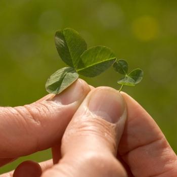 Seminte gazon ecologic cu trifoi alb Eco Lawn Turfline 1 Kg #2