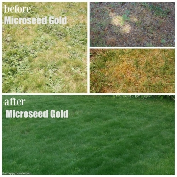 Ingrasamant microseed gold, microgranulat cu aplicare la sol, 1kg, eurotsa #4