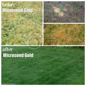 Ingrasamant microseed gold, microgranulat cu aplicare la sol, EuroTsa #2